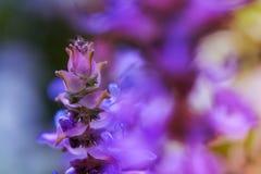 开花紫色 库存照片