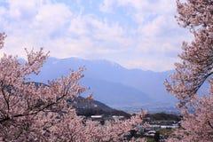 开花catle樱桃takato 库存图片