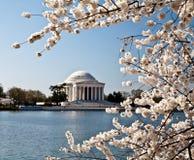 开花dc杰斐逊纪念品华盛顿 免版税库存照片