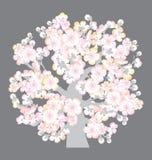 开花sacura结构树 库存图片