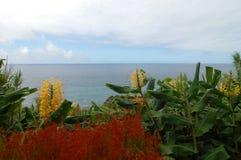 开花ver亚速尔群岛的海岸 图库摄影