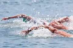 开阔水域游泳 库存图片