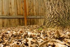 离开从树下落了 免版税库存图片