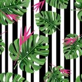 异乎寻常的与桃红色花和黑条纹的密林植物热带棕榈叶 向量背景 向量例证