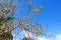 异乎寻常的亚洲树 库存照片