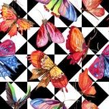 异乎寻常的在水彩样式的蝴蝶狂放的昆虫样式 向量例证