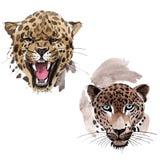 异乎寻常的在水彩样式的豹子野生动物被隔绝的 库存例证