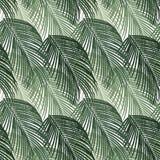 异乎寻常的密林棕榈树的无缝的样式 在白色背景的绿色热带叶子 库存照片
