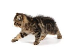 异乎寻常的小猫一点 免版税库存图片