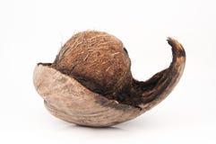 异乎寻常的椰子 图库摄影