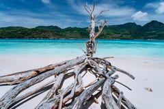 异乎寻常的热带海岛和在白色沙滩的干燥树全景有清楚的绿松石盐水湖的 库存照片