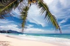 异乎寻常的热带海滩。 免版税库存照片