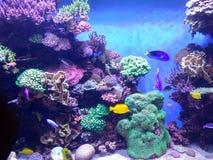 异乎寻常的珊瑚礁水族馆 免版税图库摄影