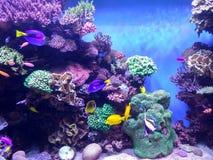 异乎寻常的珊瑚礁水族馆 免版税库存图片