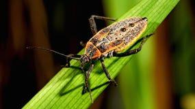 异乎寻常的甲虫 图库摄影