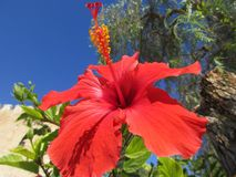 异乎寻常的红色花 图库摄影