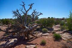异乎寻常的结构树 免版税库存图片