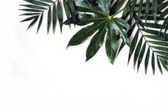 异乎寻常的自然被称呼的照片,密林构成 在白色桌背景隔绝的绿色棕榈和葱木属叶子 库存图片
