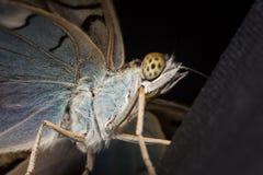 异乎寻常的蝴蝶极端宏指令 库存照片