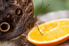 异乎寻常的蝴蝶种类拍摄了在一个热带庭院里面 库存照片