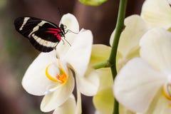 异乎寻常的蝴蝶种类拍摄了在一个热带庭院里面 免版税库存图片
