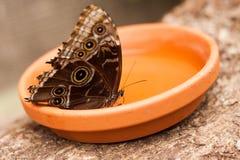 异乎寻常的蝴蝶种类拍摄了在一个热带庭院里面 库存图片