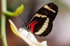 异乎寻常的蝴蝶种类拍摄了在一个热带庭院里面 图库摄影