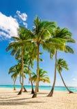 异乎寻常的高棕榈树,狂放的海滩天蓝色的水,加勒比海,多米尼加共和国 图库摄影