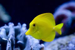 异乎寻常的鱼 免版税图库摄影