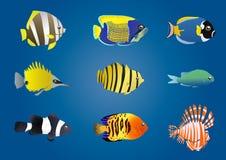 异乎寻常的鱼 向量例证