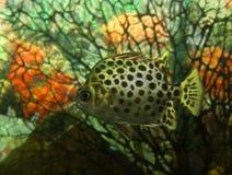 异乎寻常的鱼 库存照片