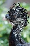 异乎寻常的鸟 免版税图库摄影