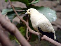异乎寻常的鸟 免版税库存照片