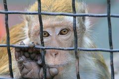异乎寻常的猴子 免版税库存照片