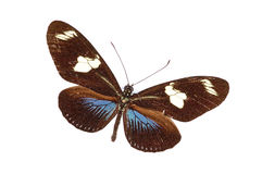 异乎寻常的蝴蝶 免版税图库摄影