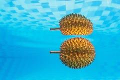 异乎寻常的亚洲多刺的果子留连果水下的背景  图库摄影