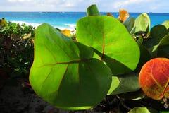 异乎寻常的叶子和海洋 库存图片