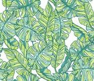 异乎寻常的叶子,雨林无缝的手拉的样式 免版税库存图片