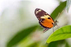 异乎寻常的在充满活力的颜色的蝴蝶极端宏观射击 Papili 库存图片