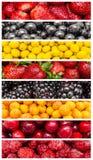 异乎寻常的夏天果子 图库摄影