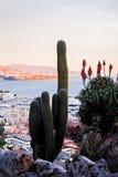 从异乎寻常的庭院的仙人掌在摩纳哥 图库摄影