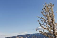 异乎寻常的树和华美的山 免版税库存照片