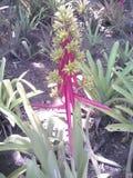 异乎寻常的植物群 免版税图库摄影