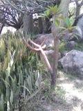 异乎寻常的植物群 库存照片