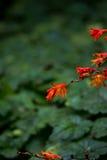 异乎寻常的橙色花在森林里 库存照片