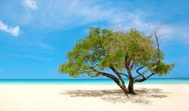 异乎寻常的海滩在多米尼加共和国, punta cana 免版税库存照片