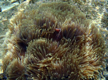 异乎寻常的海洋生物 免版税库存图片