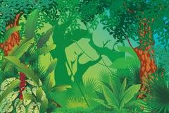 异乎寻常的热带森林 库存例证