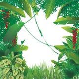 异乎寻常的热带森林 皇族释放例证