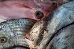 异乎寻常的热带海鱼待售,新鲜的海抓住:在海滩市场上的桃红色深海鱼,灰色和绿色鱼在南印度 免版税库存图片